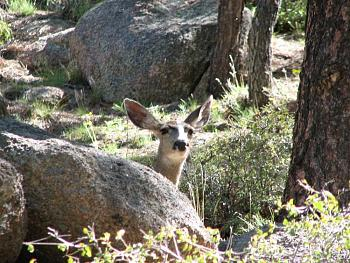 WILDLIFE pics . . . post em if ya gottum-hualapai-cabin-2011-336.jpg
