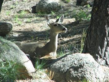 WILDLIFE pics . . . post em if ya gottum-hualapai-cabin-2011-340.jpg