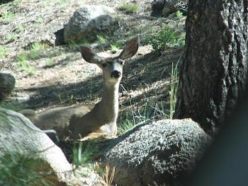 WILDLIFE pics . . . post em if ya gottum-hualapai-cabin-2011-342.jpg