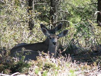 WILDLIFE pics . . . post em if ya gottum-hualapai-cabin-2011-371.jpg