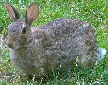 WILDLIFE pics . . . post em if ya gottum-hoppy2009.jpg