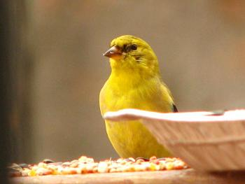 """How about your """"bird"""" photos.....here's a few of mine.-img_0835.jpg"""