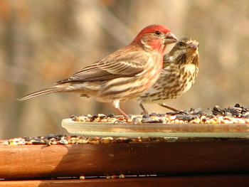 """How about your """"bird"""" photos.....here's a few of mine.-img_1251.jpg"""