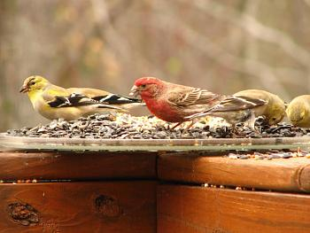 """How about your """"bird"""" photos.....here's a few of mine.-img_0546.jpg"""