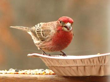"""How about your """"bird"""" photos.....here's a few of mine.-img_0863.jpg"""