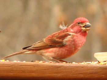 """How about your """"bird"""" photos.....here's a few of mine.-img_0182-2-.jpg"""