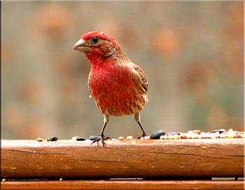 """How about your """"bird"""" photos.....here's a few of mine.-img_0857-copy.jpg"""