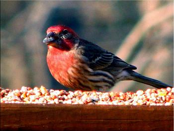 """How about your """"bird"""" photos.....here's a few of mine.-img_1027-copy.jpg"""
