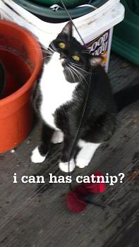 WILDLIFE pics . . . post em if ya gottum-catnip2.jpg