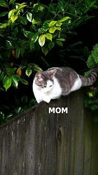 WILDLIFE pics . . . post em if ya gottum-cheshire-cat.jpg