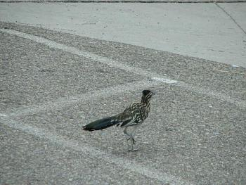 """How about your """"bird"""" photos.....here's a few of mine.-swansea-001.jpg"""