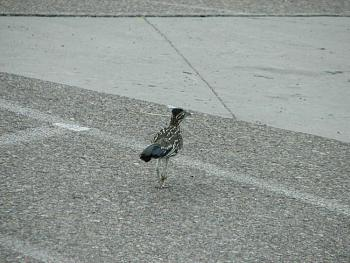 """How about your """"bird"""" photos.....here's a few of mine.-swansea-002.jpg"""