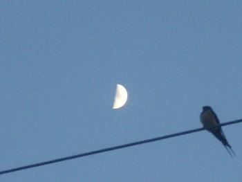 """How about your """"bird"""" photos.....here's a few of mine.-pictures-camera-december-20-2010-132.jpg"""