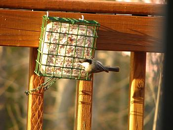 """How about your """"bird"""" photos.....here's a few of mine.-img_1493.jpg"""