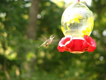 """How about your """"bird"""" photos.....here's a few of mine.-img_1054.jpg"""