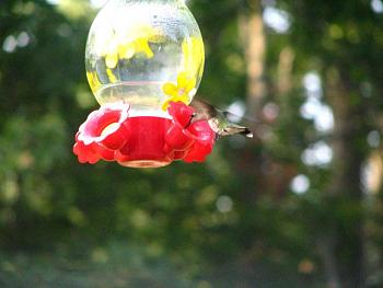 """How about your """"bird"""" photos.....here's a few of mine.-img_1072.jpg"""