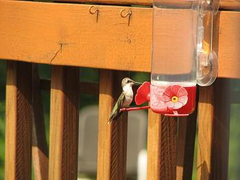 """How about your """"bird"""" photos.....here's a few of mine.-img_1651.jpg"""