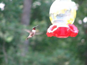 """How about your """"bird"""" photos.....here's a few of mine.-img_1137.jpg"""