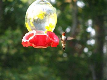 """How about your """"bird"""" photos.....here's a few of mine.-img_1163.jpg"""