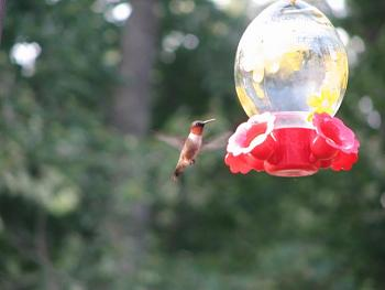 """How about your """"bird"""" photos.....here's a few of mine.-img_1214.jpg"""