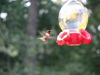 """How about your """"bird"""" photos.....here's a few of mine.-img_1223.jpg"""