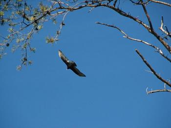 """How about your """"bird"""" photos.....here's a few of mine.-img_0193.jpg"""