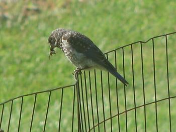 """How about your """"bird"""" photos.....here's a few of mine.-bird-frog-beak-garden.jpg"""