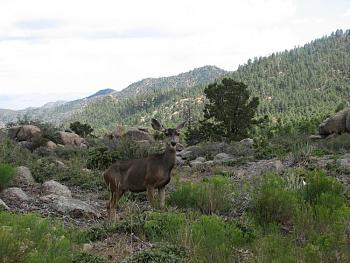 WILDLIFE pics . . . post em if ya gottum-antother-hualapai-day-019.jpg