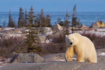WILDLIFE pics . . . post em if ya gottum-churchill-manitoba-wildlife-picture_10757.jpg