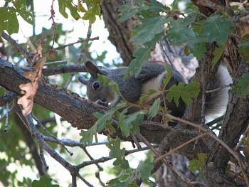 WILDLIFE pics . . . post em if ya gottum-squirrel-012.jpg