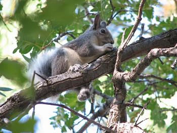 WILDLIFE pics . . . post em if ya gottum-squirrel-016.jpg