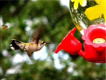 """How about your """"bird"""" photos.....here's a few of mine.-img_6148-copy.jpg"""