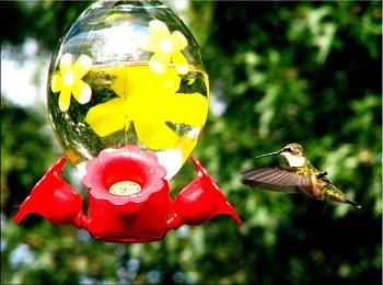 """How about your """"bird"""" photos.....here's a few of mine.-img_6161-copy.jpg"""