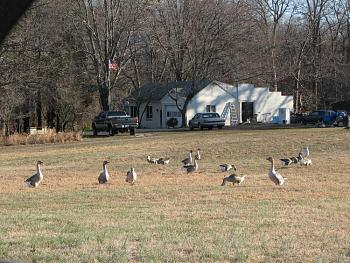 """How about your """"bird"""" photos.....here's a few of mine.-churches-squirrels-birds-molly-109.jpg"""