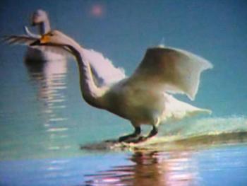 "How about your ""bird"" photos.....here's a few of mine.-%7Be85140cb-e76e-4c52-8a4d-05aa51389e26%7D-img_7425.jpg"