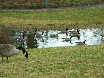 """How about your """"bird"""" photos.....here's a few of mine.-img_6670.jpg"""