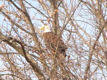 """How about your """"bird"""" photos.....here's a few of mine.-img_3534.jpg"""