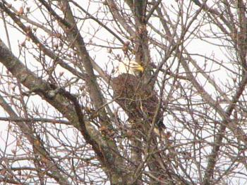 """How about your """"bird"""" photos.....here's a few of mine.-img_3480.jpg"""