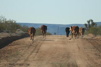 Just shooting down or along the highway as I traveled ... scenery, roadways, etc.!-fetching-water-002-copy.jpg