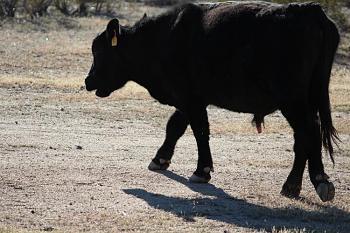 My neighbor is a FAT COW!!!-jr-doing-yardwork-001-copy.jpg