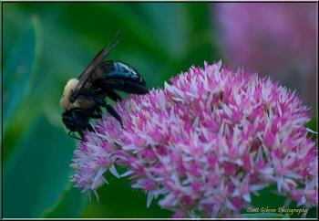 """Everybody loves """"flowers"""" and """"trees""""......let's share-add yours!-sedum.jpg"""