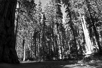 Sequoia National Park-dsc_9359-bw.jpg