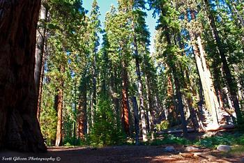Sequoia National Park-dsc_9359.jpg