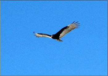"""How about your """"bird"""" photos.....here's a few of mine.-img_6179-copy.jpg"""