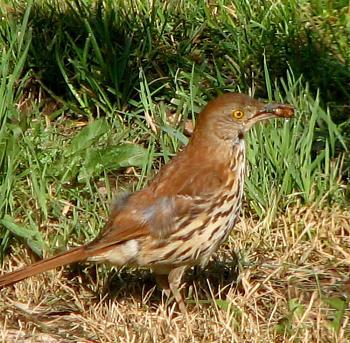 "How about your ""bird"" photos.....here's a few of mine.-bird-berries-beak.jpg"