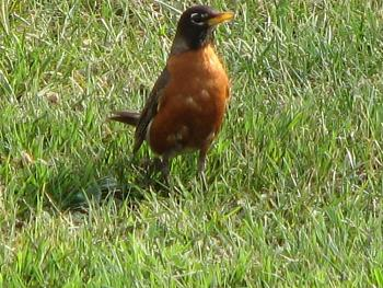 "How about your ""bird"" photos.....here's a few of mine.-07-07-2005_103.jpg"