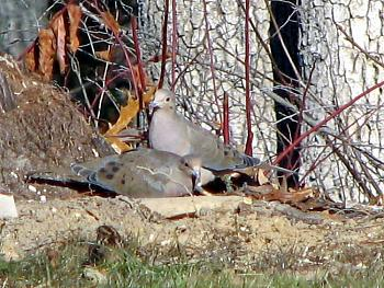 """How about your """"bird"""" photos.....here's a few of mine.-12-21-2005_119_edited.jpg"""