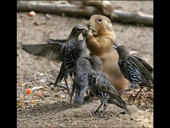 """How about your """"bird"""" photos.....here's a few of mine.-004-small-.jpg"""