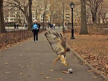 """How about your """"bird"""" photos.....here's a few of mine.-untitled-small-.jpg"""