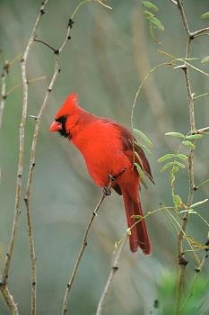 """How about your """"bird"""" photos.....here's a few of mine.-wildlife-56-.jpg"""